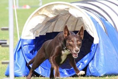 Dog Grooming Hampton Park